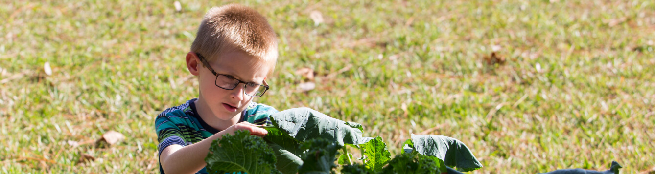 A young boy inspects a garden plant with big leaves. [CREDIT: UF/IFAS Extension]
