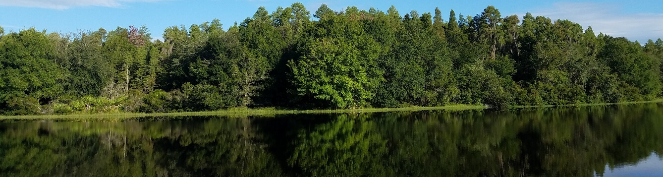 Trees reflected in a lake with a bright blue sky