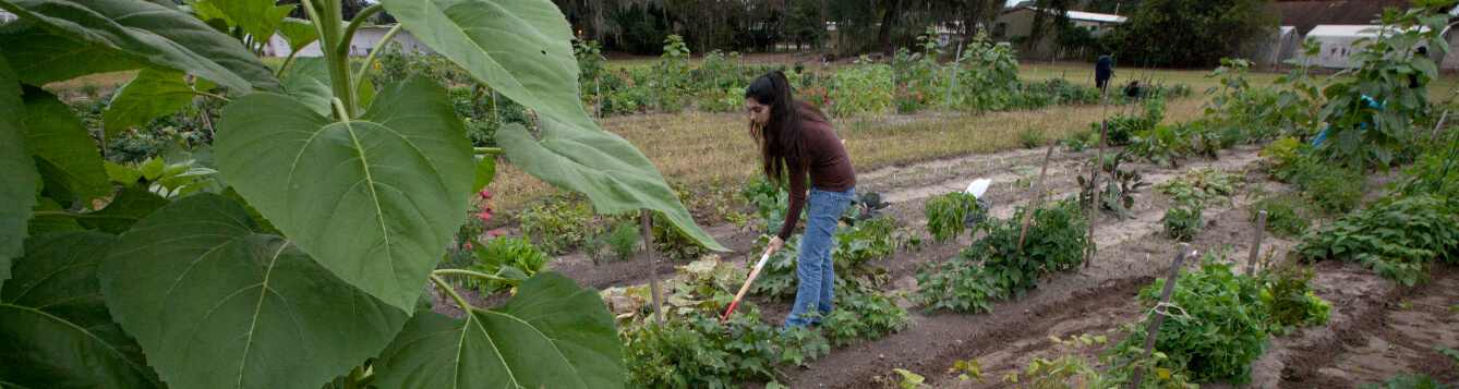 A woman tends to an outdoor garden in Florida. [CREDIT: UF/IFAS]