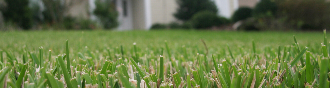 ground-level shot of mown turf grass in front of a Florida home