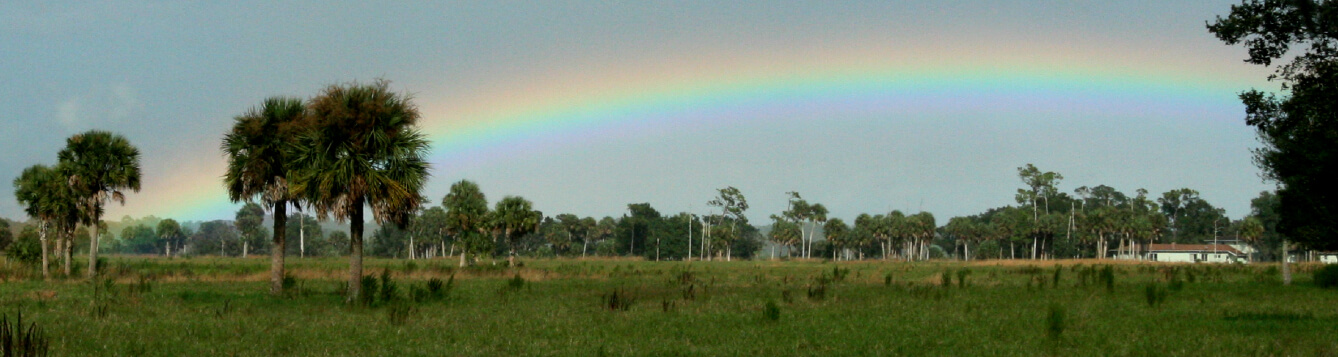 A rainbow over a southern Florida ranch highlights prairie, grasslands, and palm trees. [CREDIT: UF/IFAS, Tom Wright]