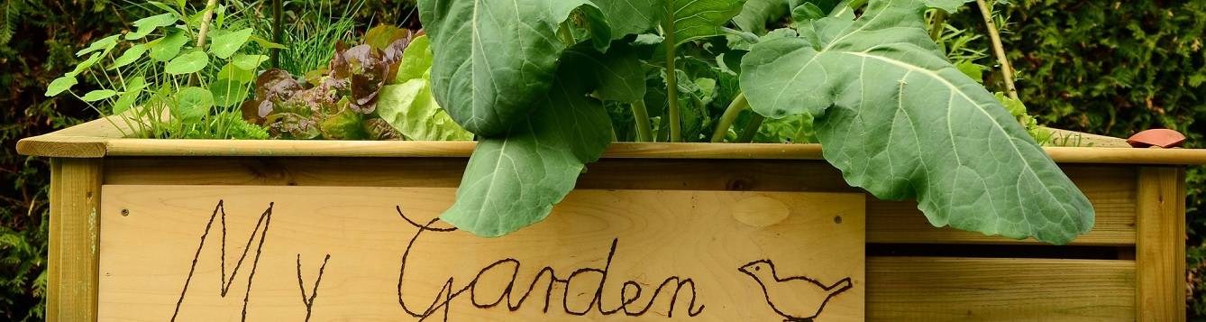 Picture of raised bed garden with My Garden written on side.