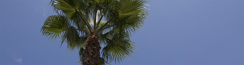 Sky, palm tree, clouds.