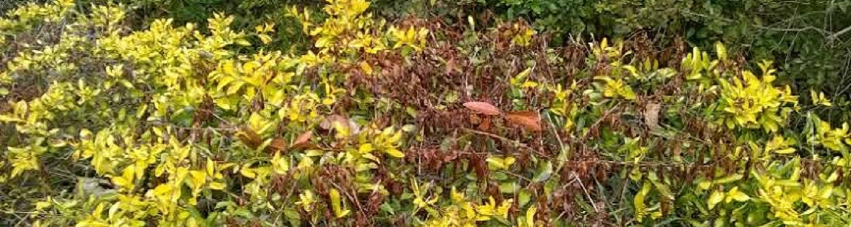 Cold Damaged Plants
