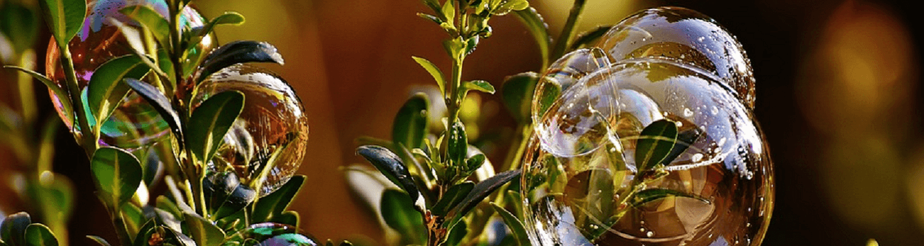 Soap bubbles on leaves