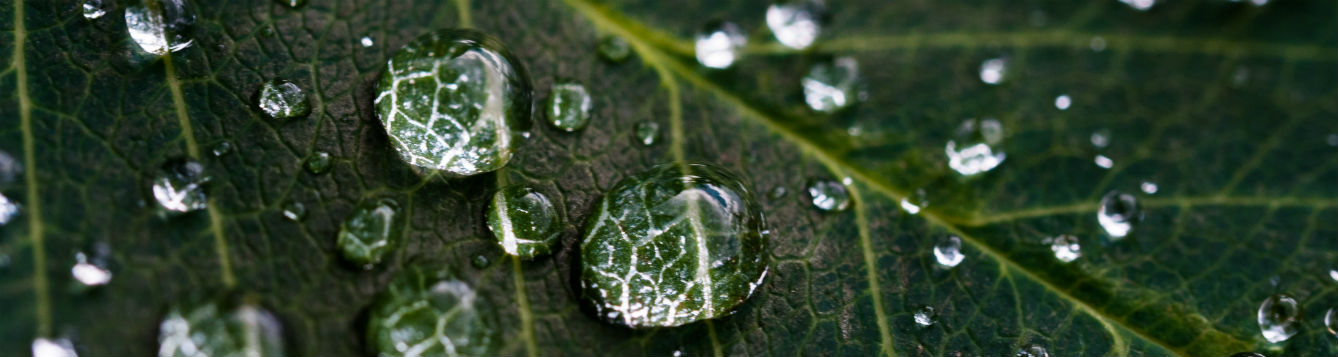 closeup photo of water droplets on a leaf