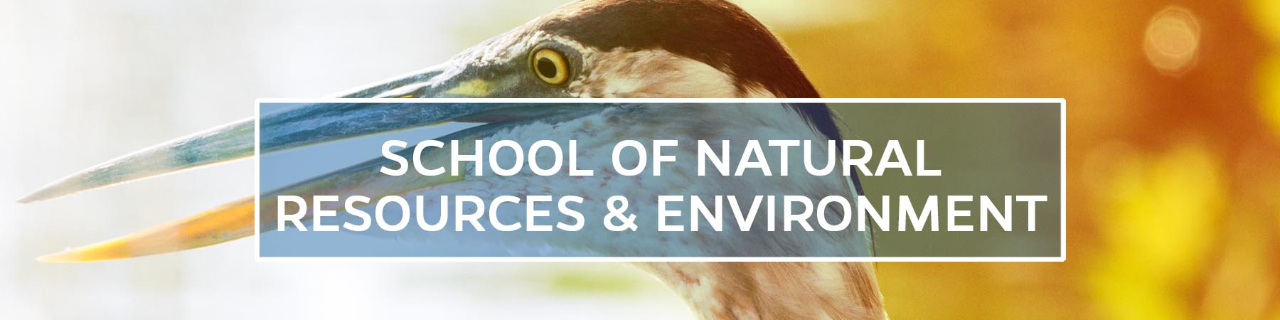 School of Natural Resources and Environment