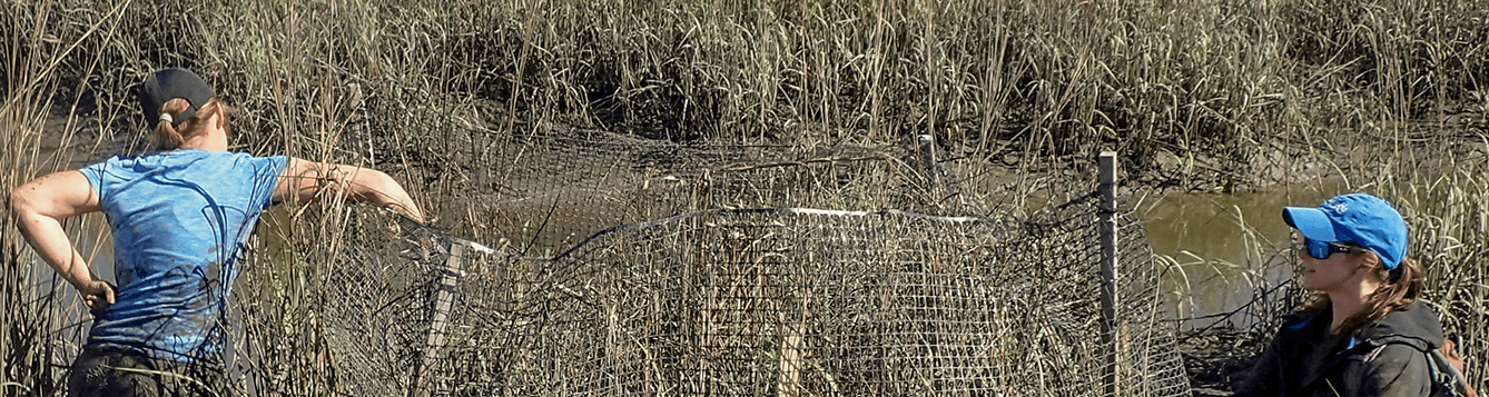 two women putting up fence in saltmarsh