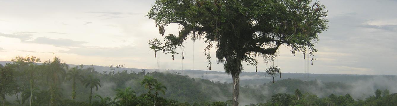 landscape of Ecuador
