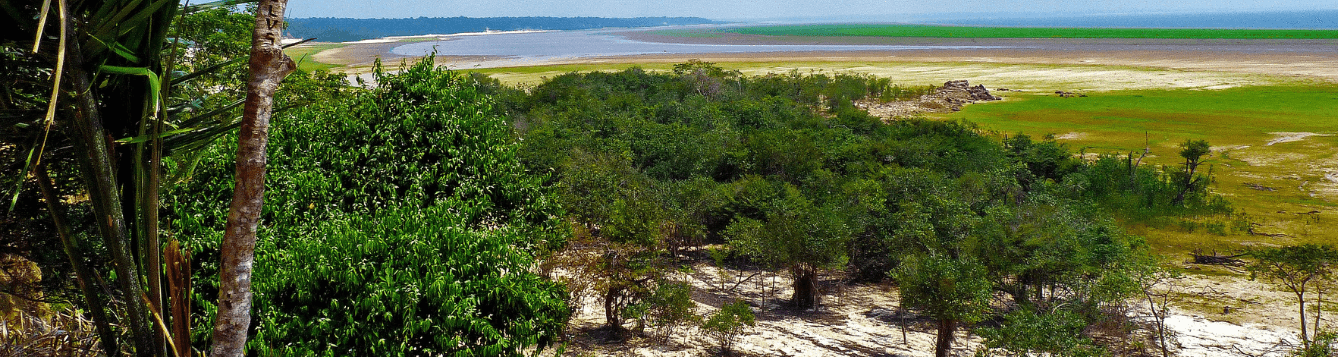 landscape image of trees in foreground and river behind