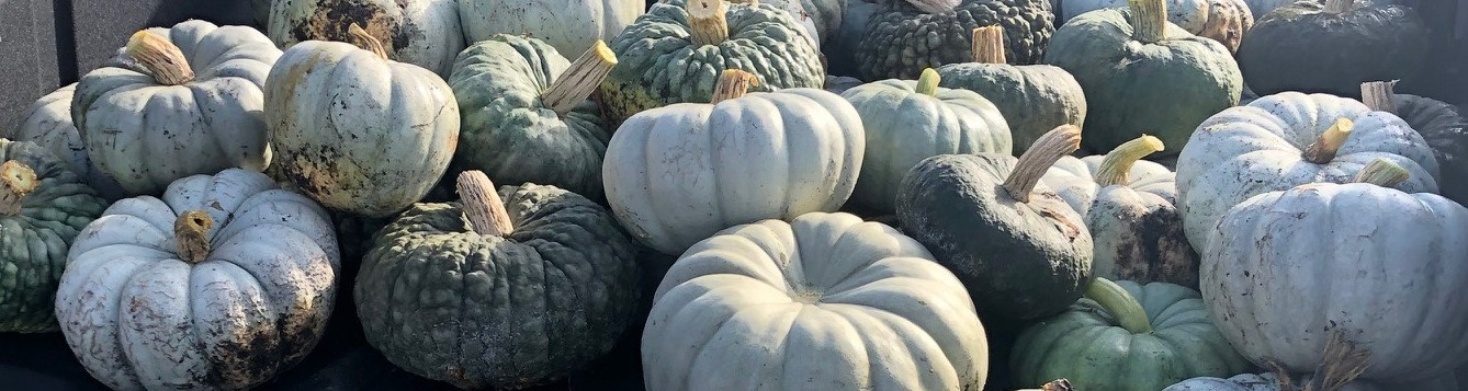 Blue and green pumpkins