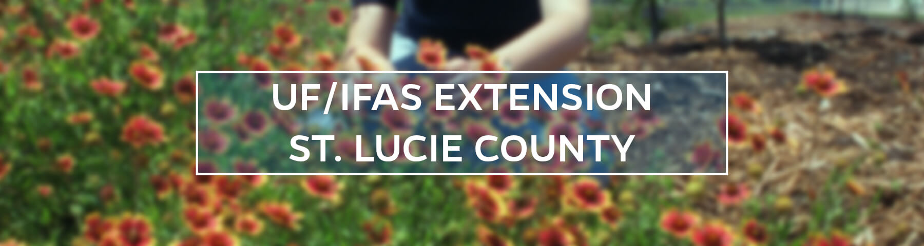 UF/IFAS Extension St. Lucie County