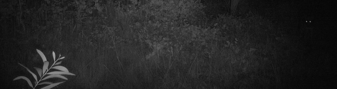 Photo by Trail Camera