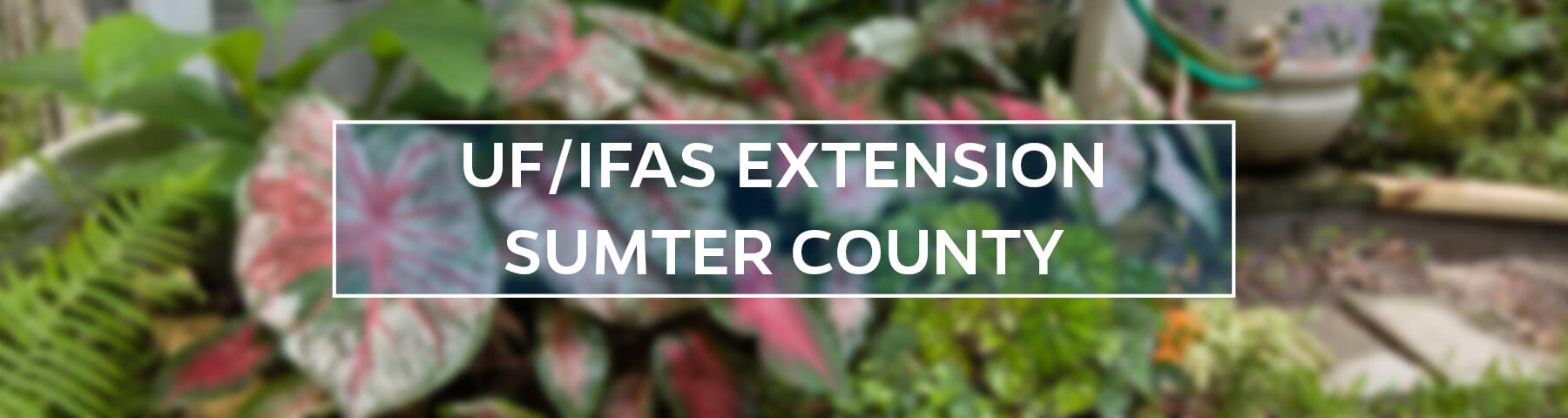 UF/IFAS Extension Sumter County