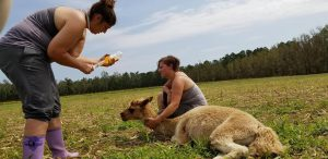 Helping Alpaca