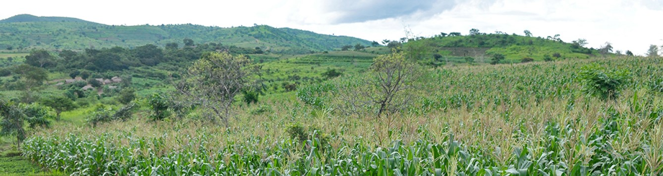 cultivated field with hills in background, photo credit T. Samson/CIMMYT