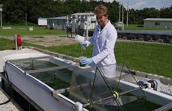 taking a sample from algae raceway pond