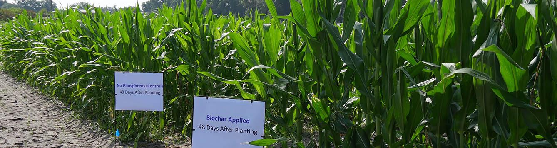 Phd thesis on biochar