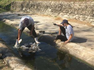securing water sensor in urban stream