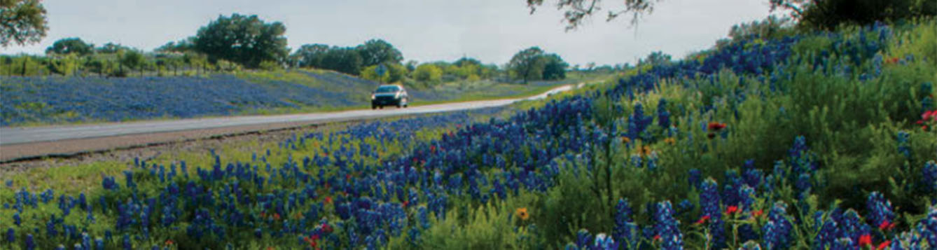 Texas highway with wildflowers on both sides of the roadway