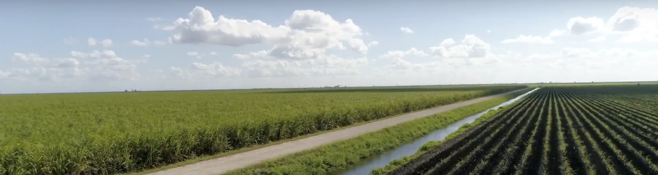 horizon of fields in Everglades Agricultural Area