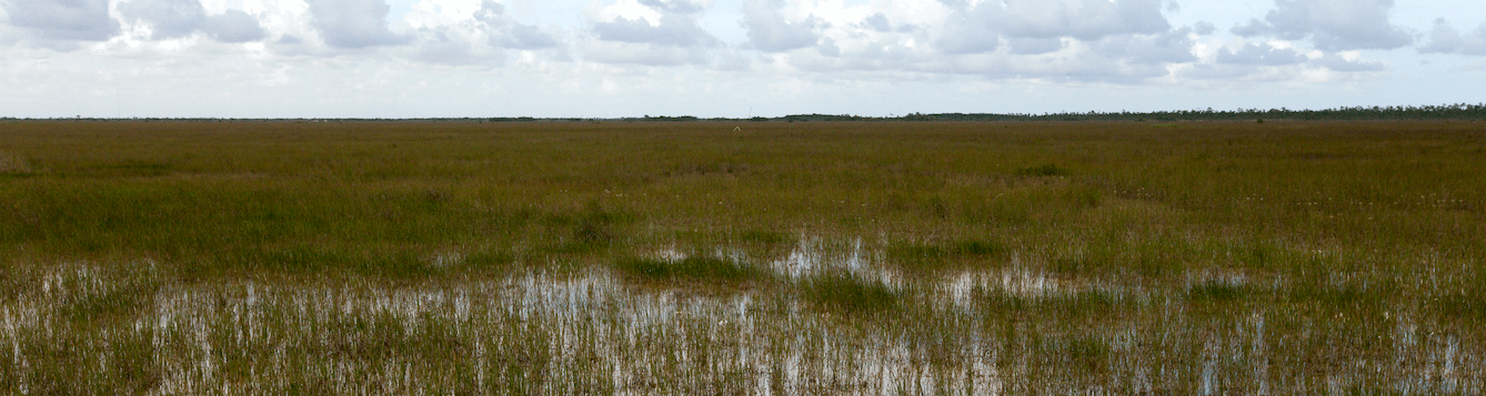 wide angled view of Florida Everglades