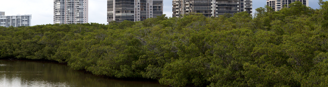 Mangroves at the beach in Naples, Florida.