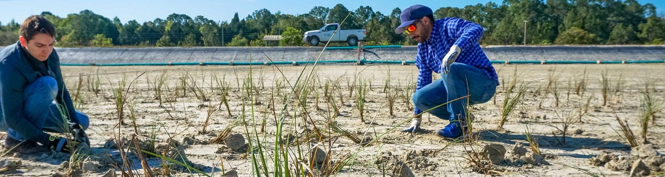 volunteers plant marsh grasses at the donor marsh