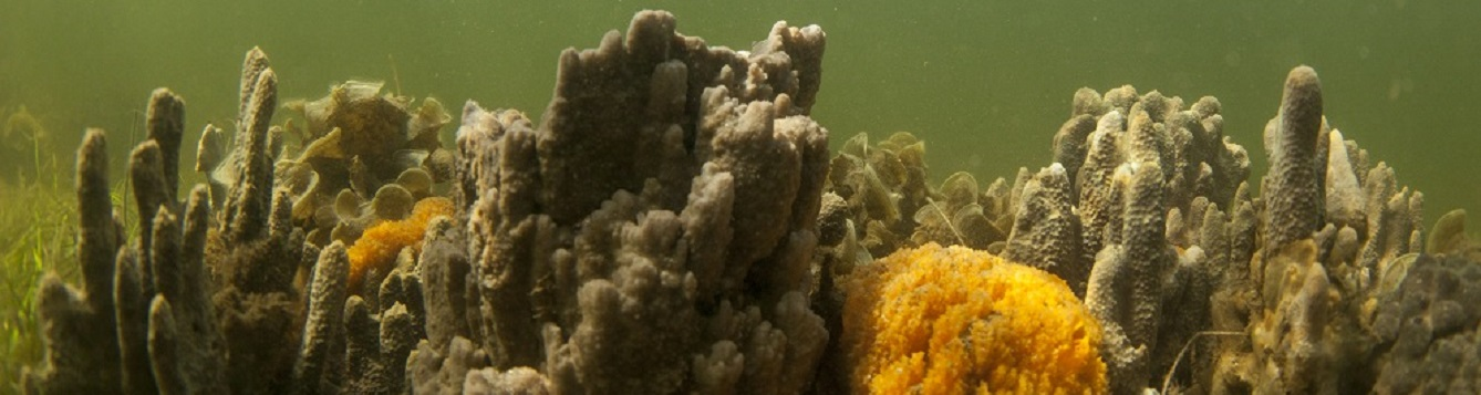 Coral reef and sponges in the Gulf of Mexico.