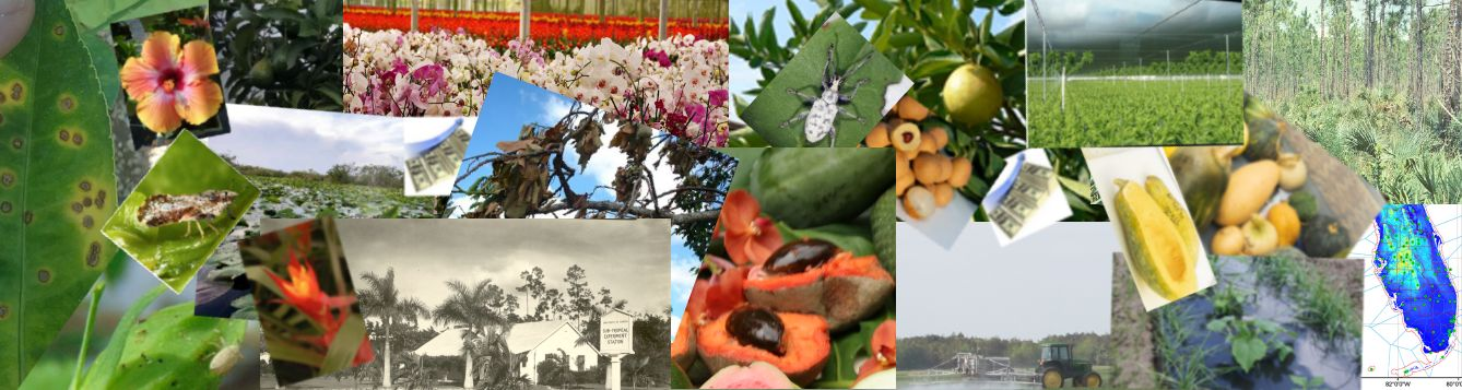 Collage of areas researched at UF?IFAS Tropical Research & Education Center
