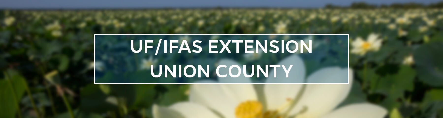 UF/IFAS Extension Union County