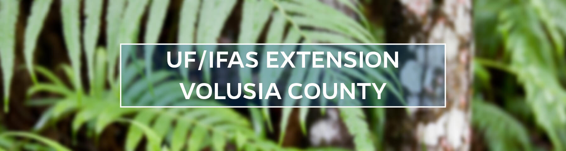 UF/IFAS Extension Volusia County