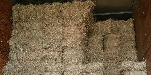 Stored square bales of hay