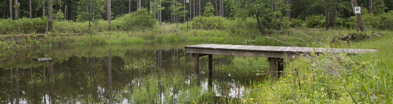 dock in a pond