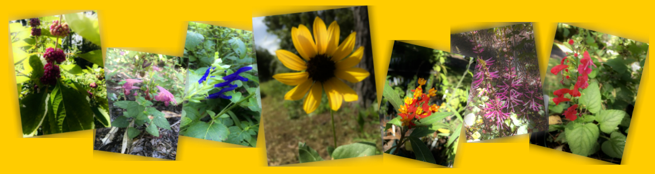 Natural Wakulla Fall Wildflower Festival Plant Sale