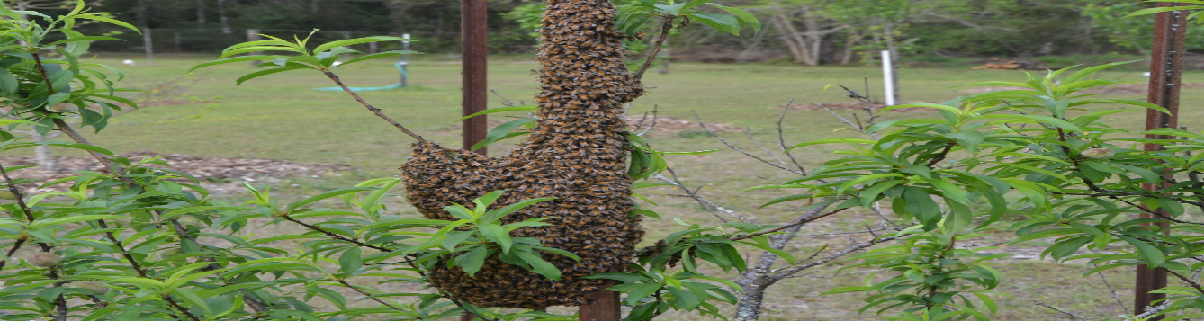 Swarmiing Bees WN 3-22-19 feat