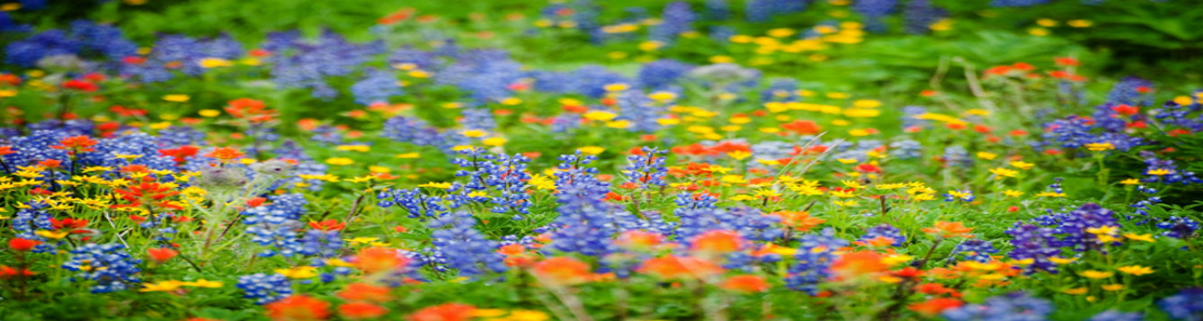 wildflower feat Photo by Les Harrison