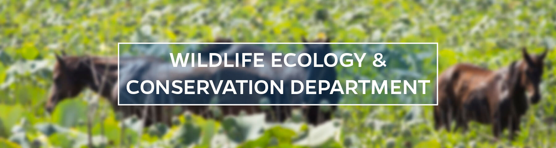UF/IFAS Wildlife Ecology and Conservation Department